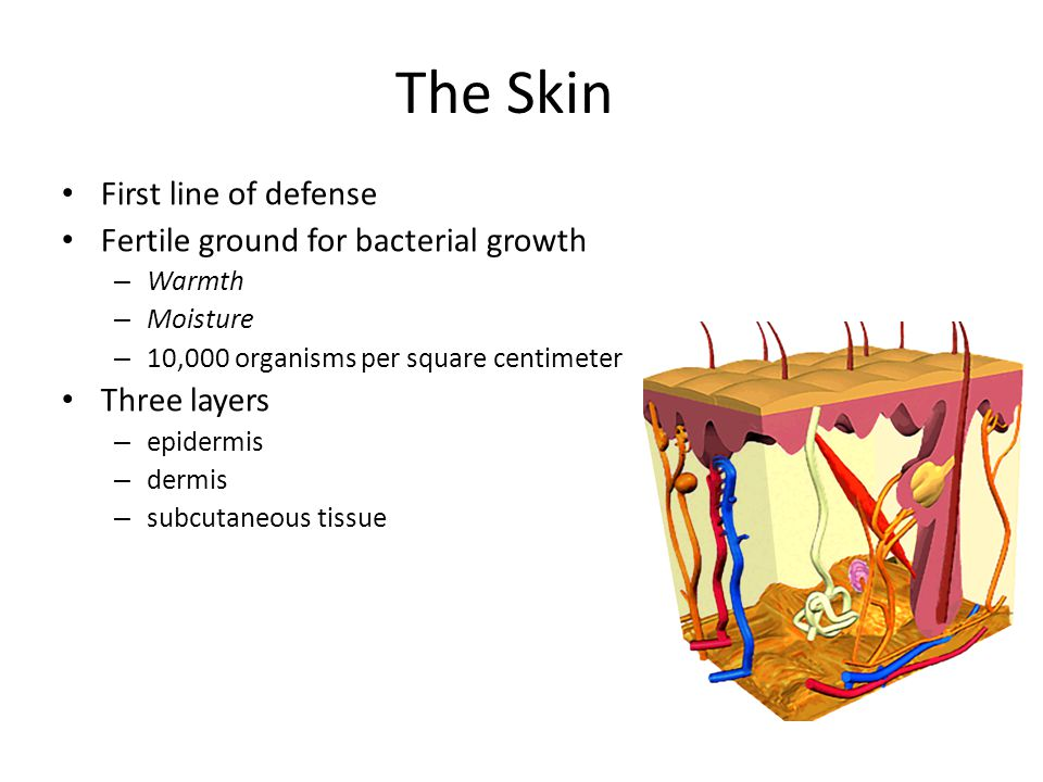 The Skin First line of defense Fertile ground for bacterial growth