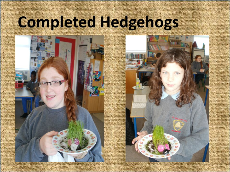 Completed Hedgehogs