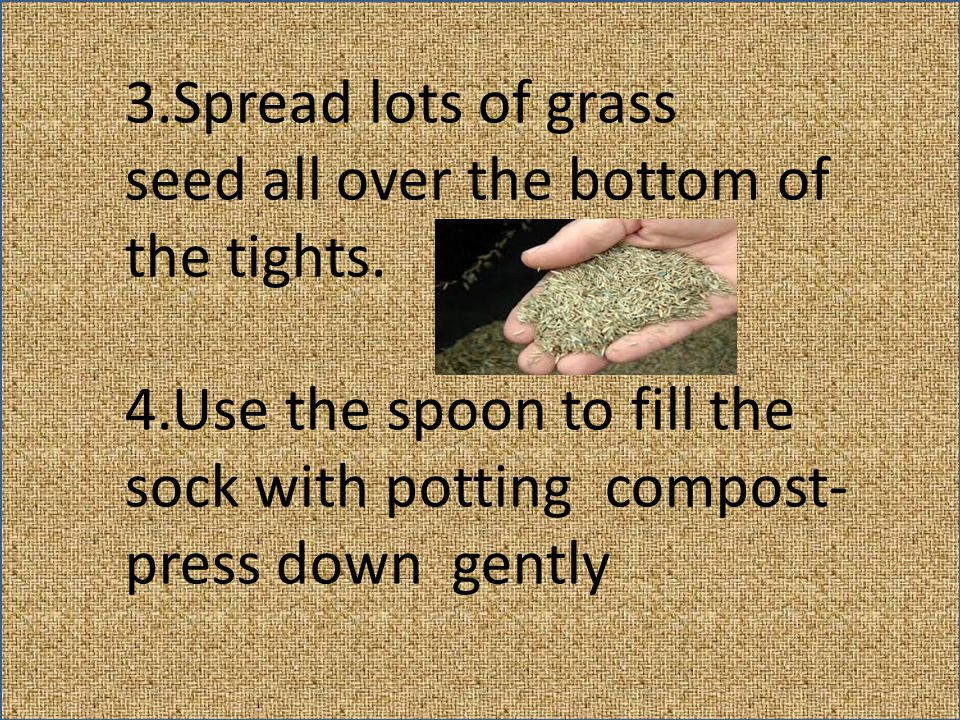 3.Spread lots of grass seed all over the bottom of the tights.