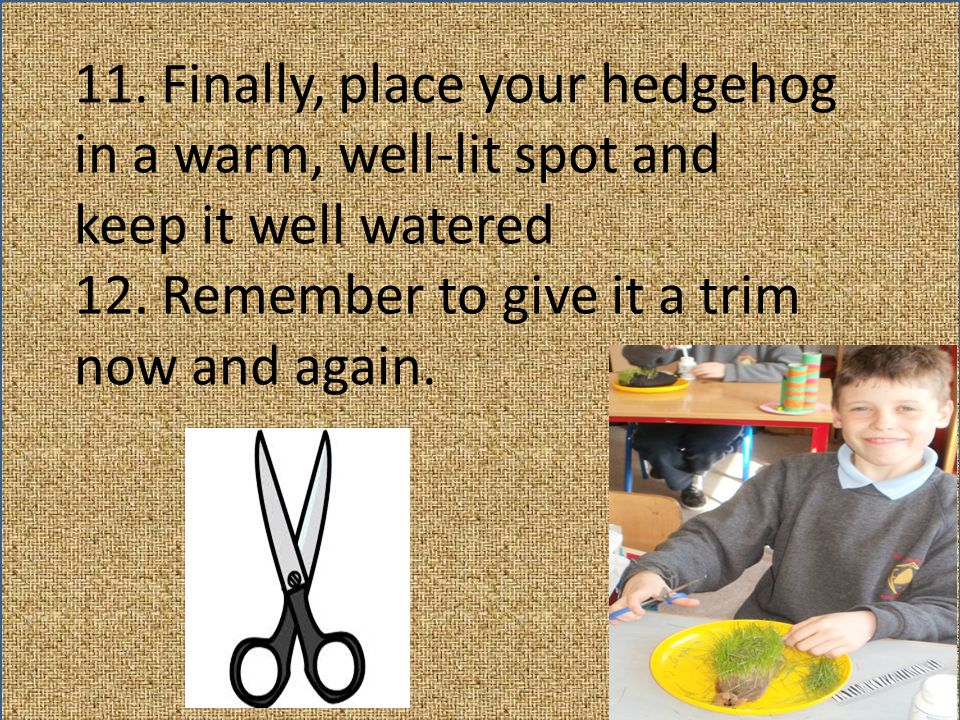 11. Finally, place your hedgehog in a warm, well-lit spot and keep it well watered