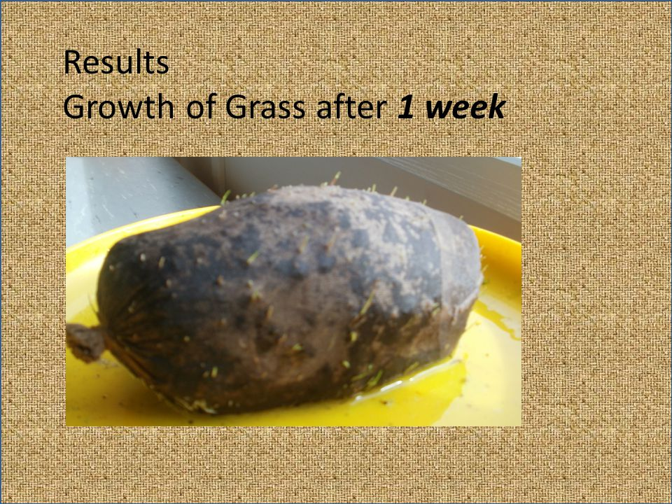 Results Growth of Grass after 1 week