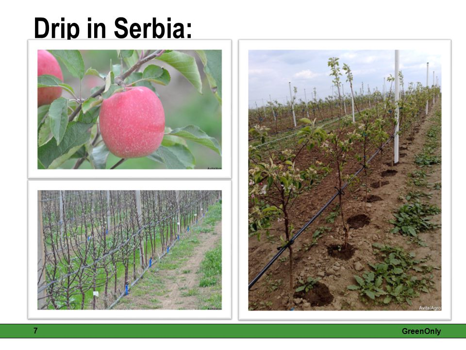 Drip in Serbia: GreenOnly