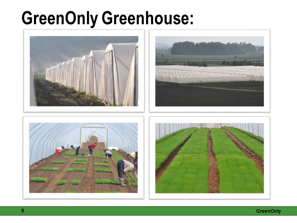 GreenOnly Greenhouse: