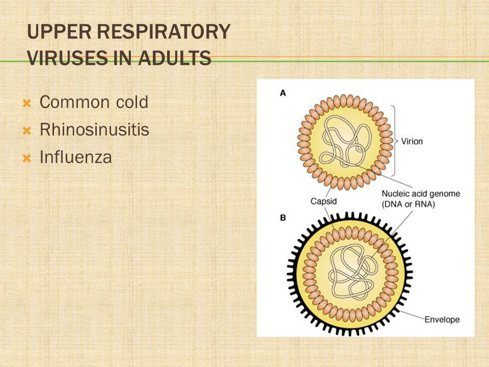 Upper Respiratory Viruses in Adults