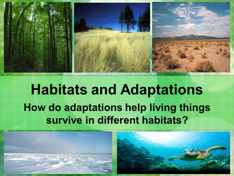 Habitats and Adaptations