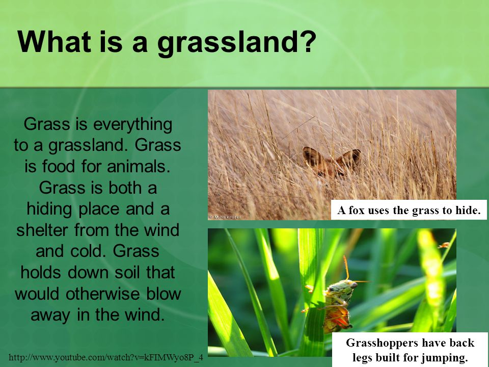 What is a grassland