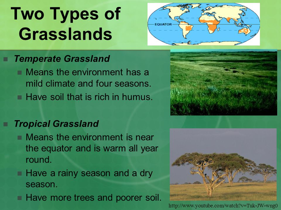 characteristics of the different types of grasslands Uk lowland grassland habitat types & characteristics  lowland meadows lowland neutral meadows and pastures consist of a rich mixture of native grasses and broad-leaved herbs.