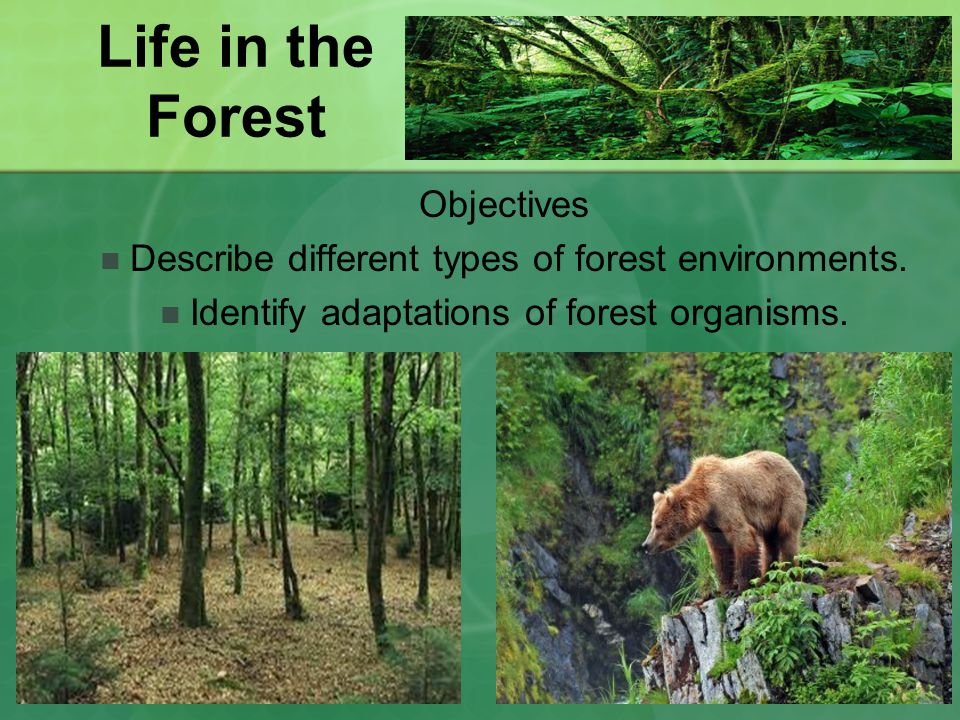 Life in the Forest Objectives