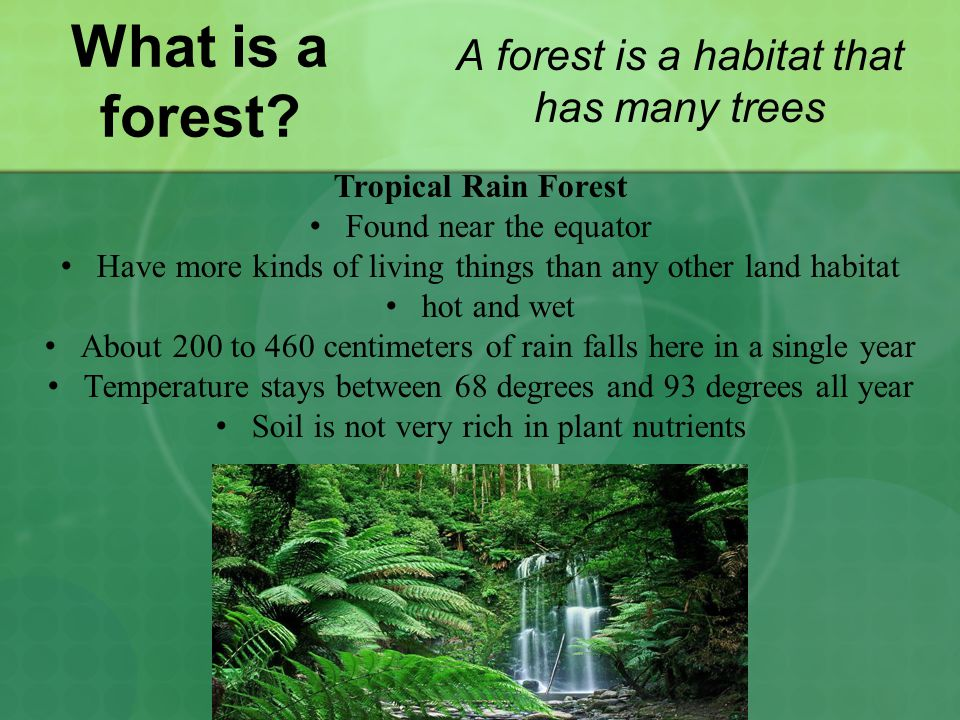 What is a forest A forest is a habitat that has many trees