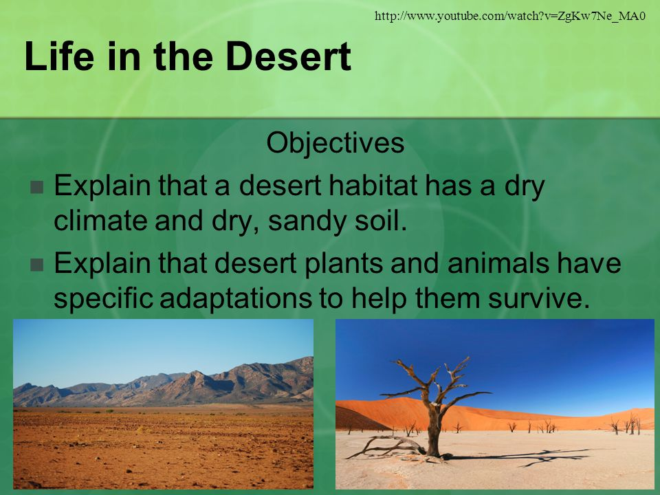 Life in the Desert Objectives