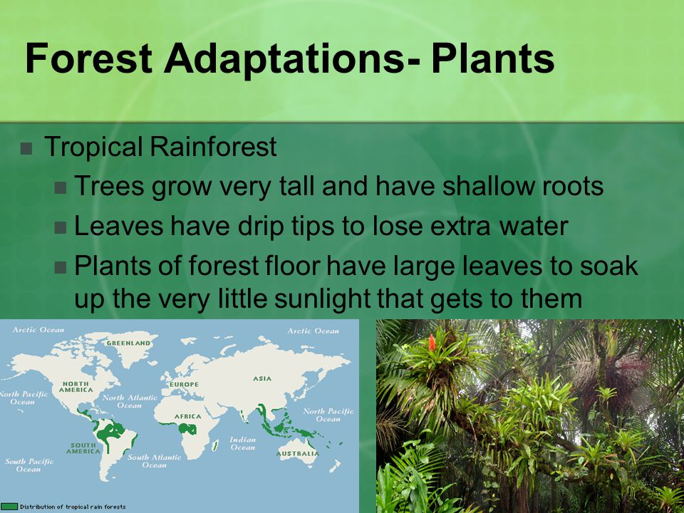 Forest Adaptations- Plants