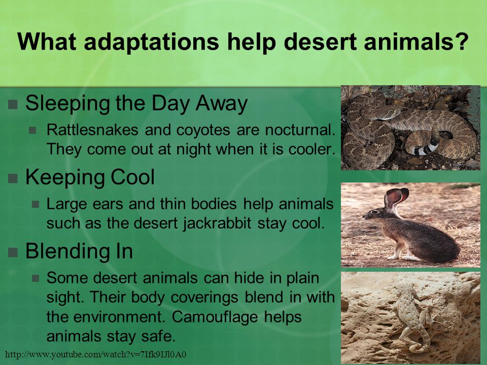 What adaptations help desert animals