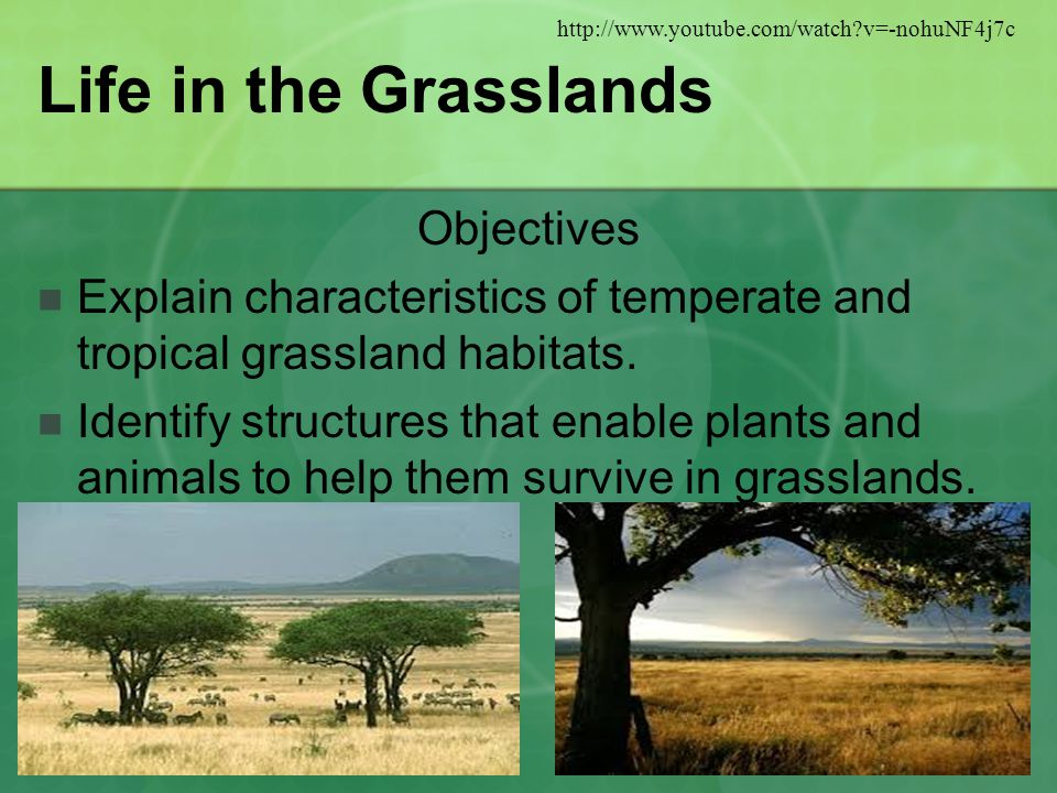 Life in the Grasslands Objectives