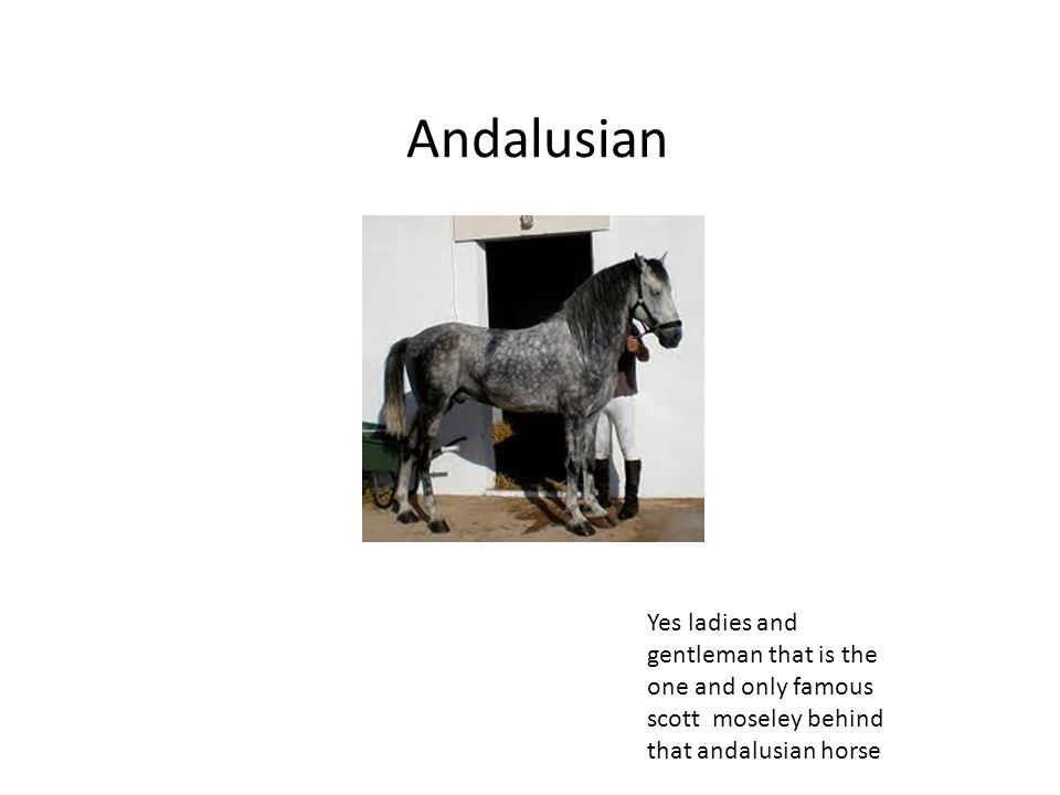 Andalusian Yes ladies and gentleman that is the one and only famous scott moseley behind that andalusian horse.