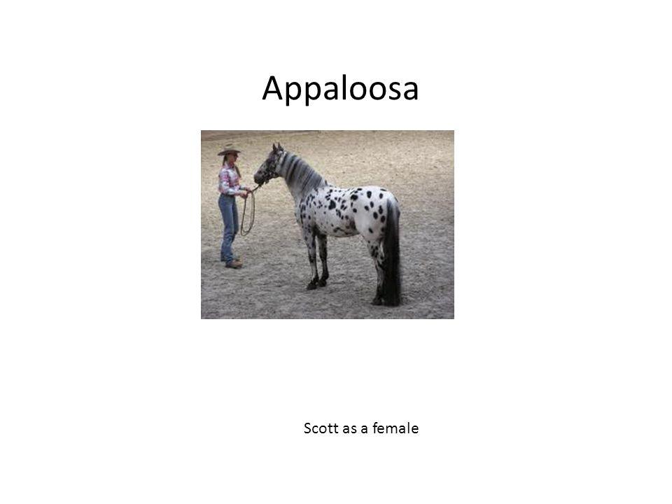 Appaloosa Scott as a female