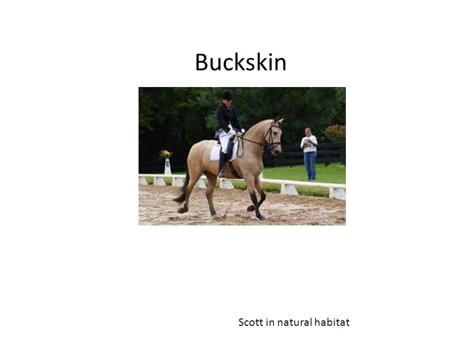 Buckskin Scott in natural habitat