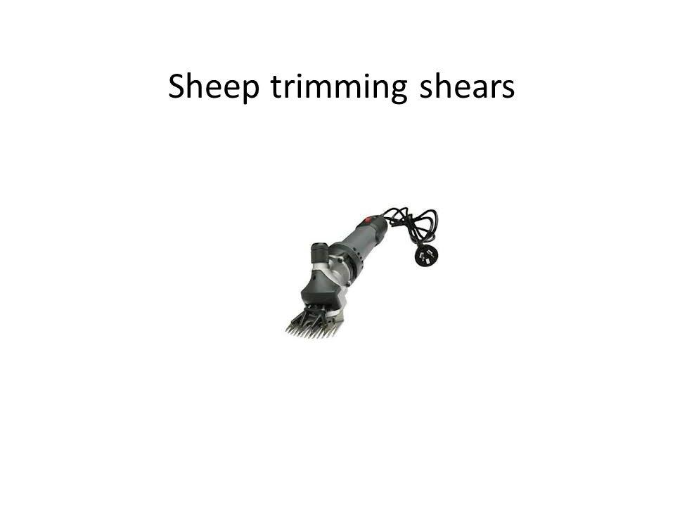 Sheep trimming shears
