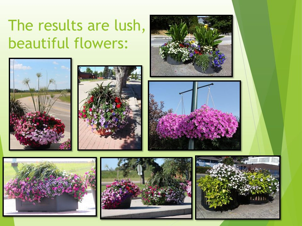 The results are lush, beautiful flowers: