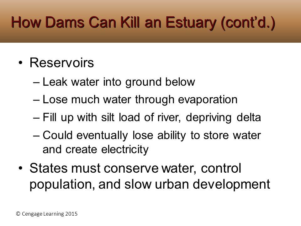How Dams Can Kill an Estuary (cont'd.)