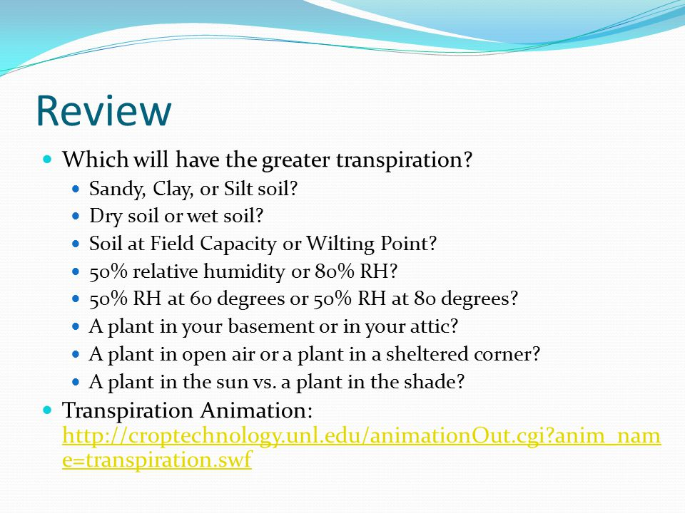 Review Which will have the greater transpiration