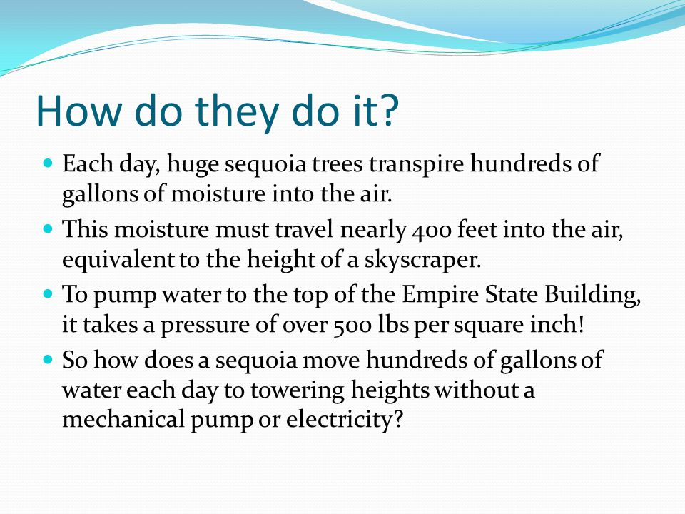 How do they do it Each day, huge sequoia trees transpire hundreds of gallons of moisture into the air.