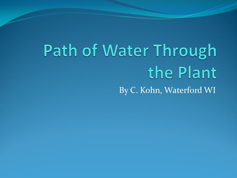 Path of Water Through the Plant