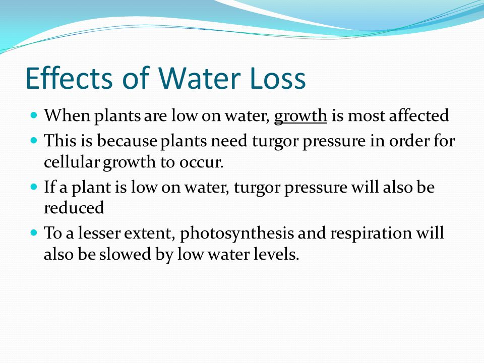Effects of Water Loss When plants are low on water, growth is most affected.