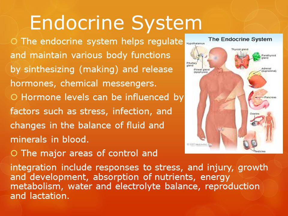 Endocrine System The endocrine system helps regulate