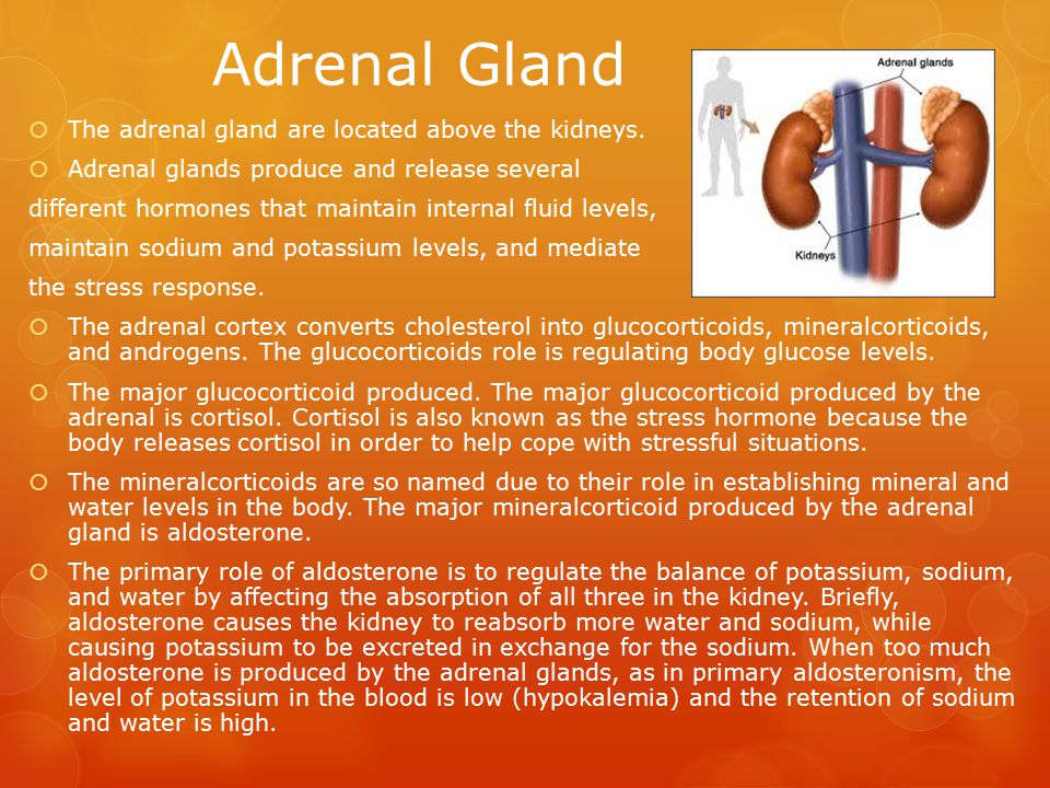 Adrenal Gland The adrenal gland are located above the kidneys.