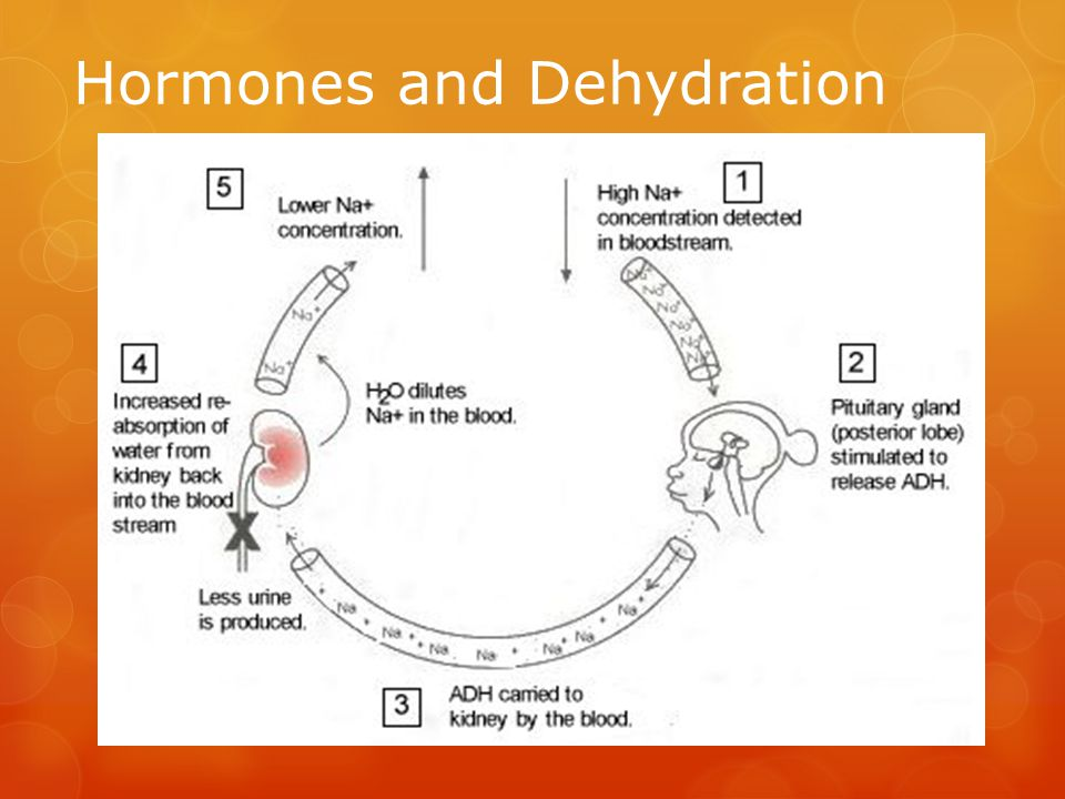 Hormones and Dehydration