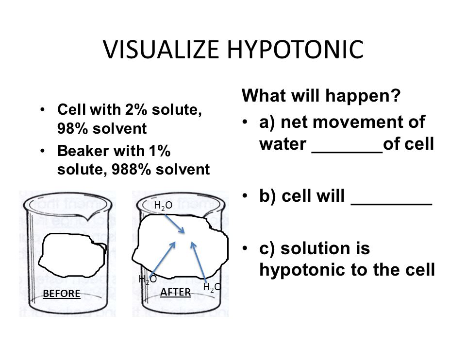 VISUALIZE HYPOTONIC What will happen