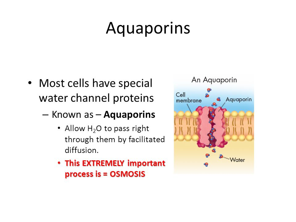 Aquaporins Most cells have special water channel proteins
