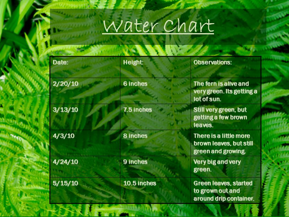 Water Chart Date: Height: Observations: 2/20/10 6 inches
