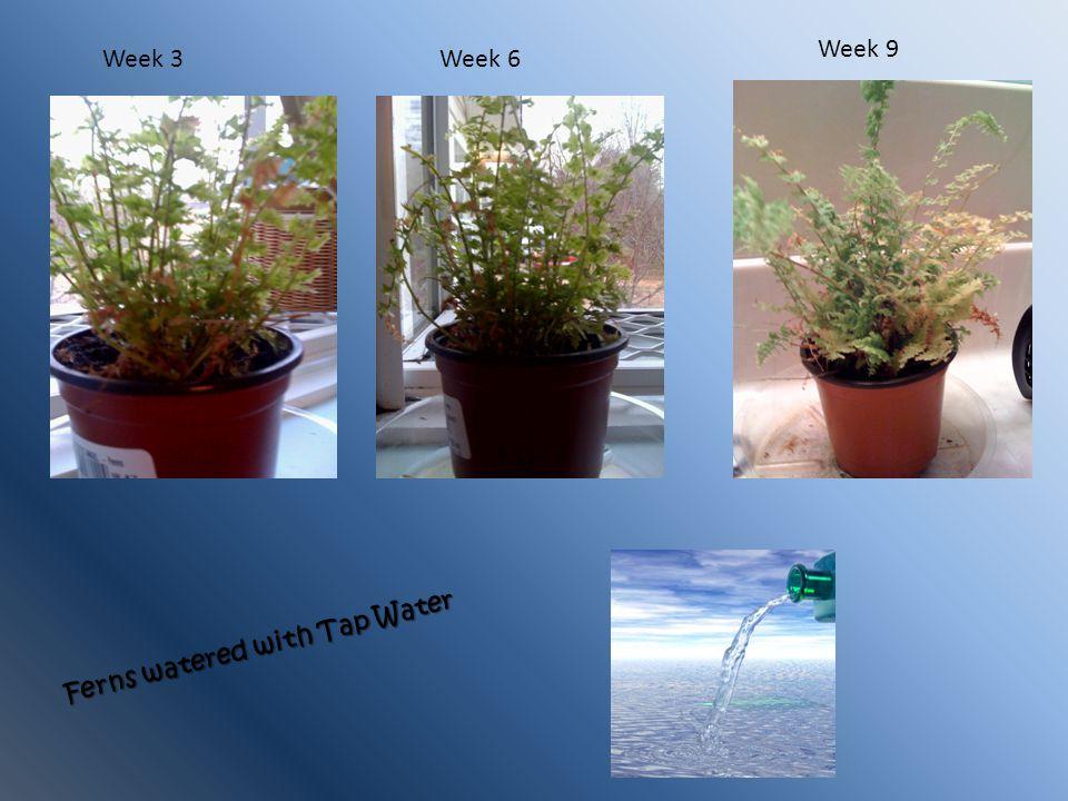 Week 9 Week 3 Week 6 Ferns watered with Tap Water