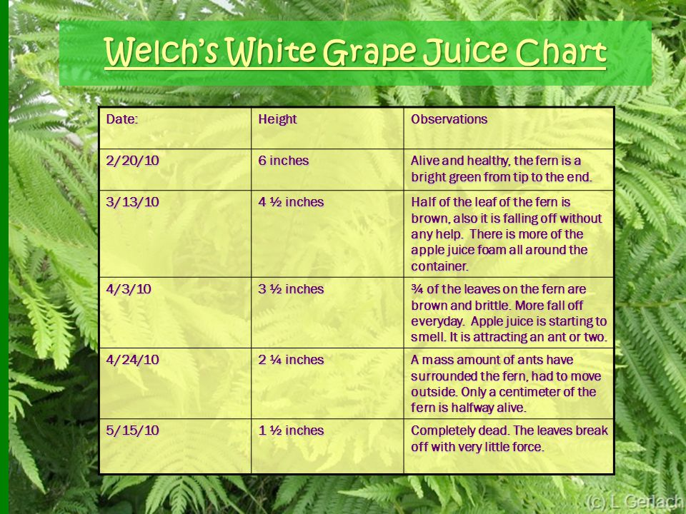 Welch's White Grape Juice Chart