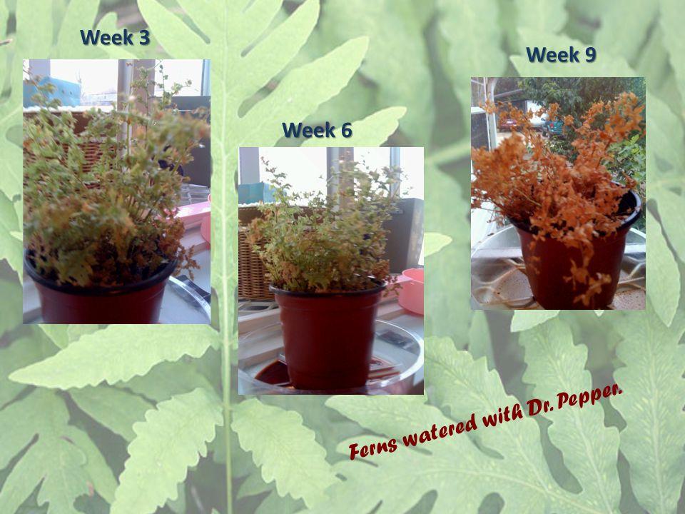 Week 3 Week 9 Week 6 Ferns watered with Dr. Pepper.
