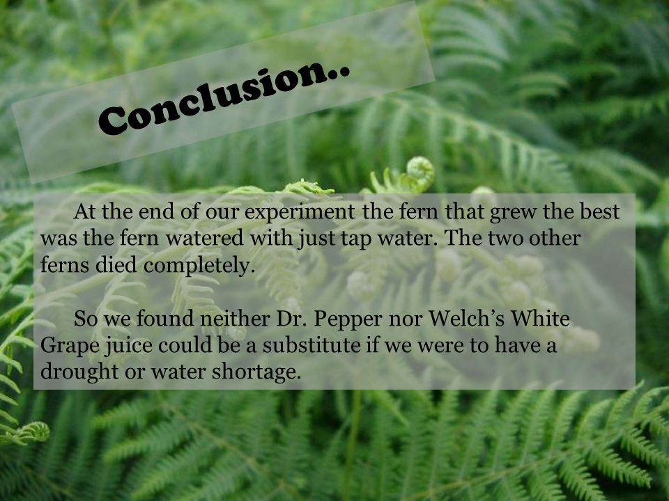 Conclusion.. At the end of our experiment the fern that grew the best was the fern watered with just tap water. The two other ferns died completely.