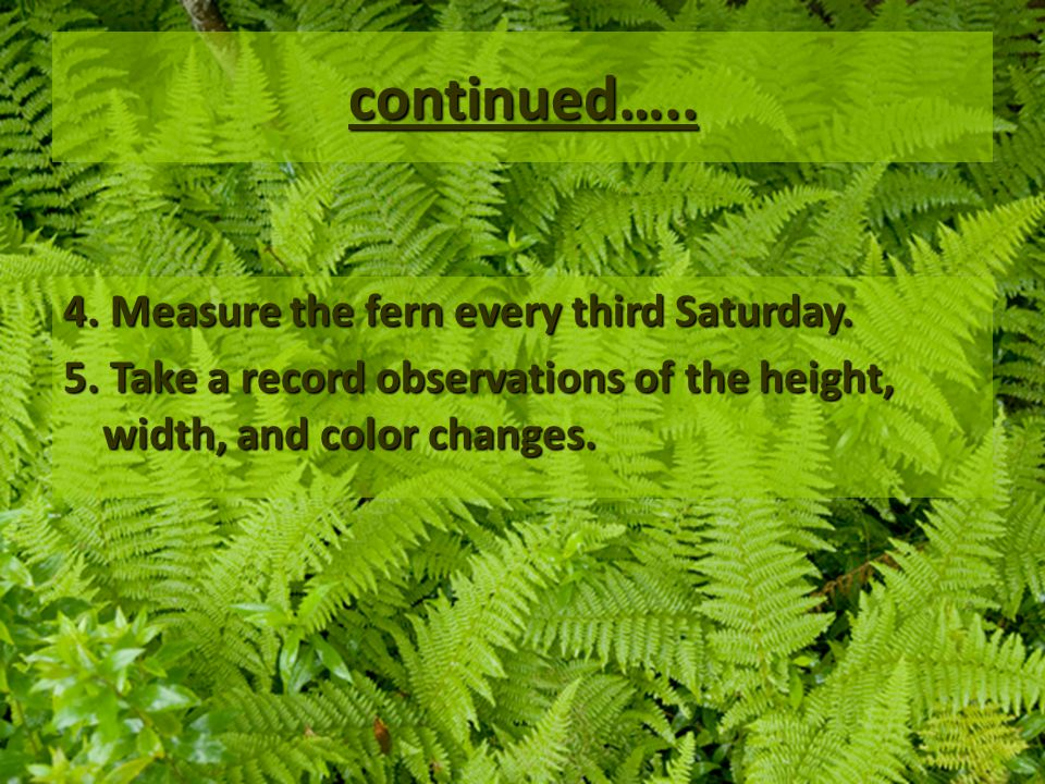 continued….. 4. Measure the fern every third Saturday.