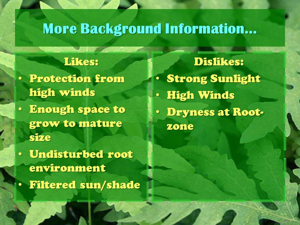 More Background Information…