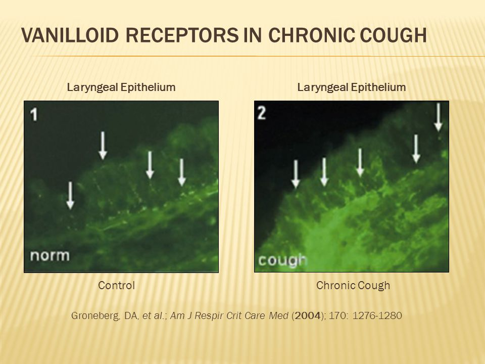 Vanilloid receptors in Chronic cough