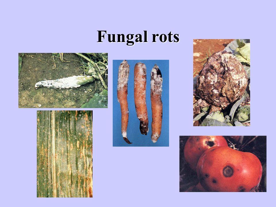 Fungal rots