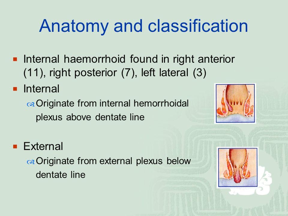 Anatomy and classification