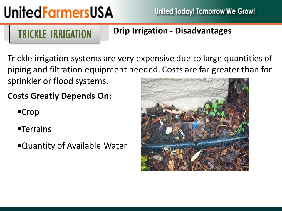 TRICKLE IRRIGATION Drip Irrigation - Disadvantages