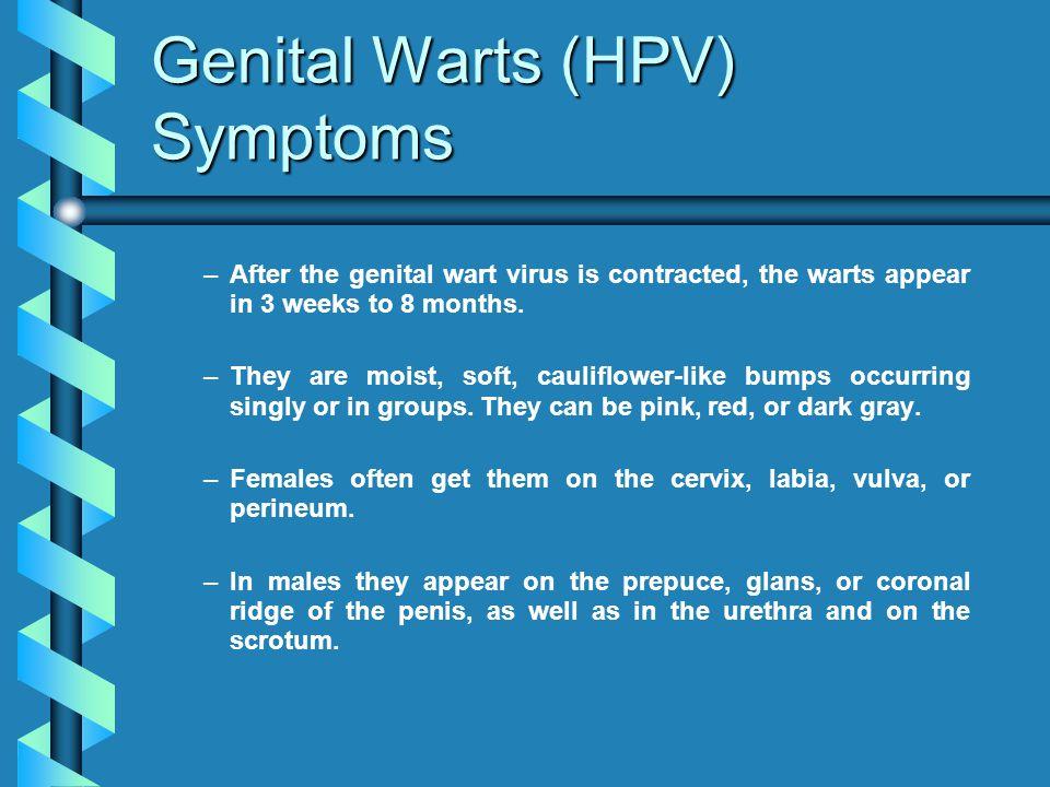 Genital Warts (HPV) Symptoms
