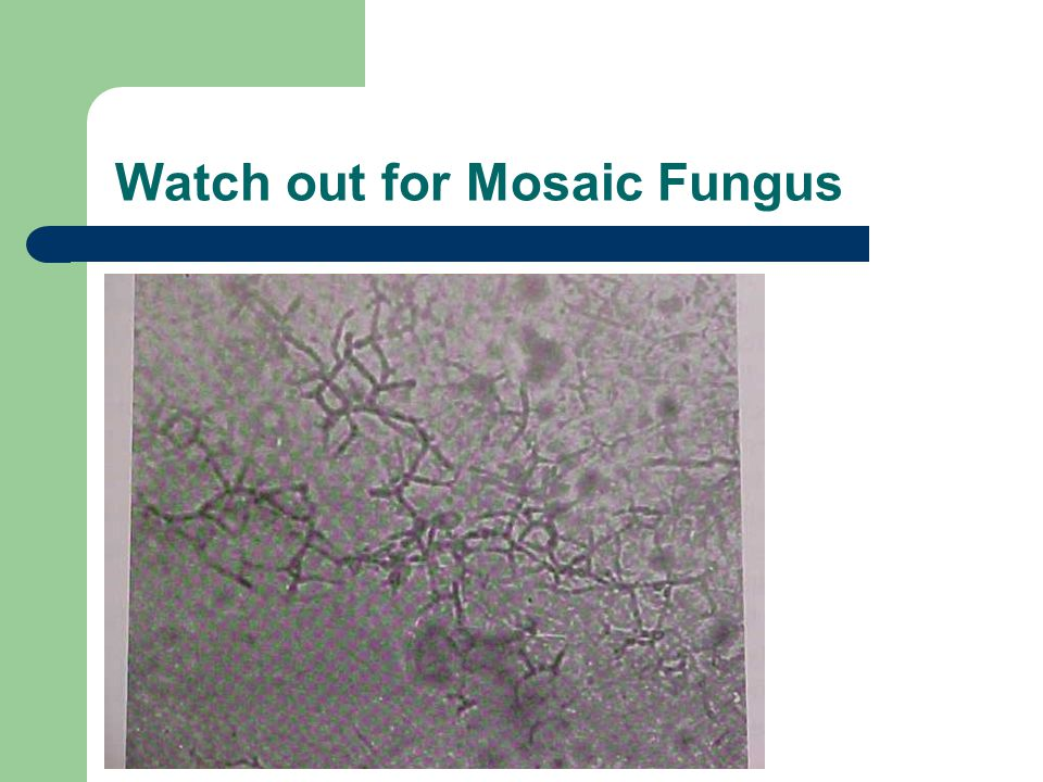 Watch out for Mosaic Fungus