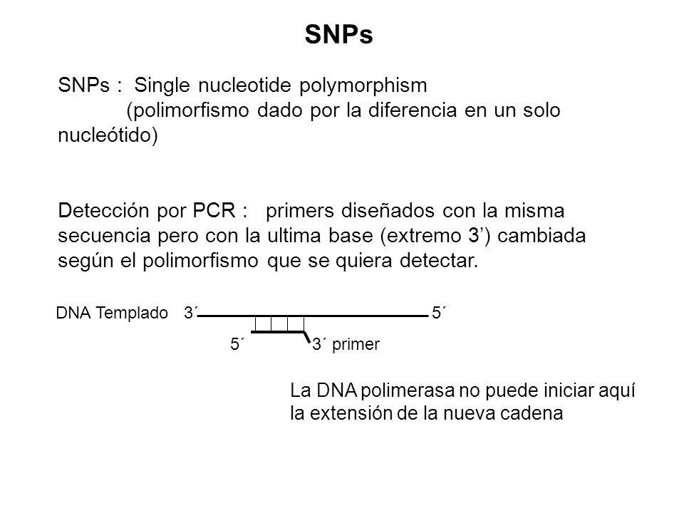 SNPs SNPs : Single nucleotide polymorphism (polimorfismo dado por la diferencia en un solo nucleótido)