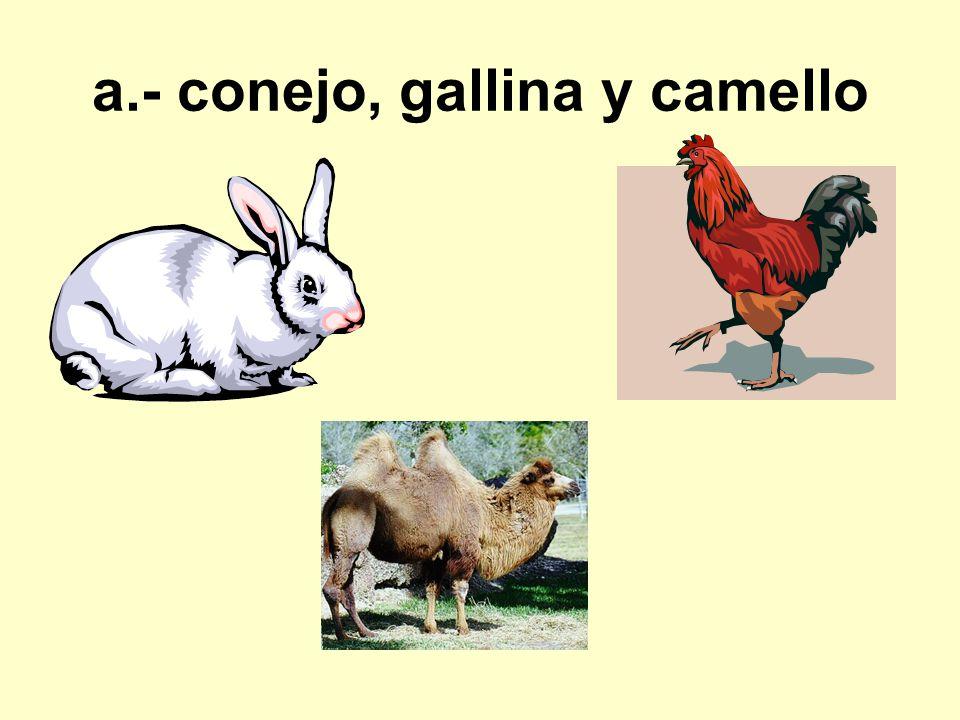 a.- conejo, gallina y camello
