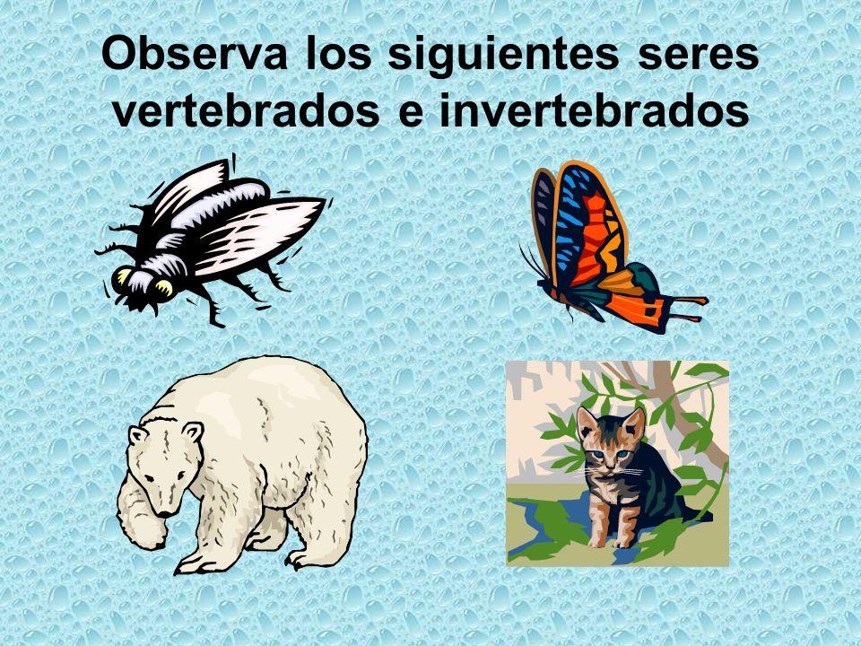 Observa los siguientes seres vertebrados e invertebrados