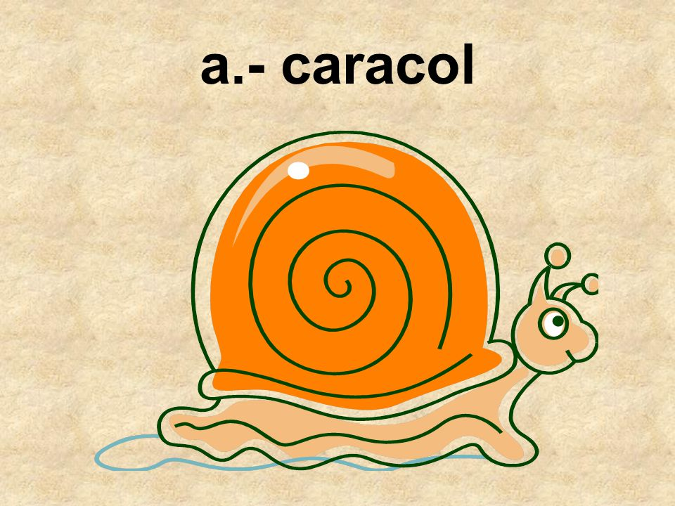 a.- caracol