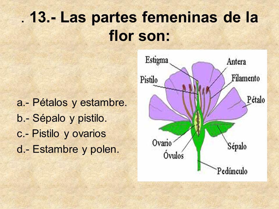 . 13.- Las partes femeninas de la flor son: